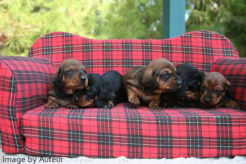 pet care puppies