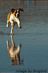 GH_dog exercise-resized-600