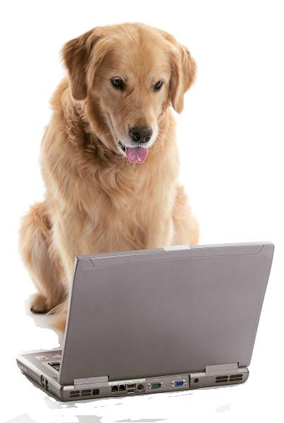 contact-dog-laptop