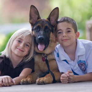 electric dog fence attleboro ma